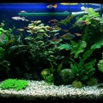 How to Have a Attractive Planted Aquarium