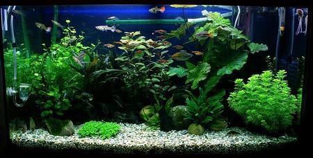 How to Have a Attractive Planted Aquarium Planted Aquarium