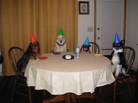 How to Host the Ultimate Dog Party Ultimate Dog party