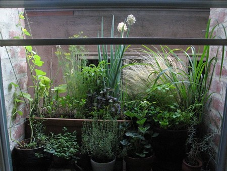 How to Have a Garden while Living in an Apartment Apartment Garden