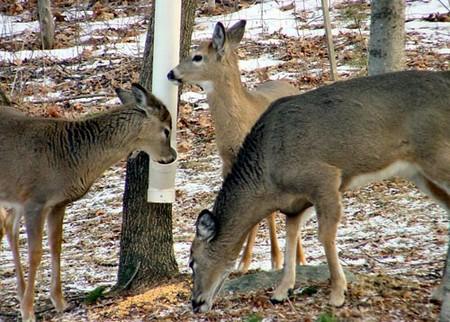 How to Build a Deer Feeder Build Deer Feeder 5