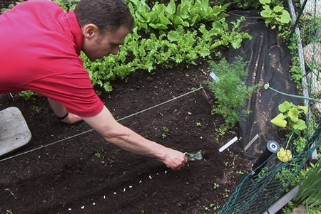 How to Do Crop Rotations in your Organic Garden  Crop Rotations Garden