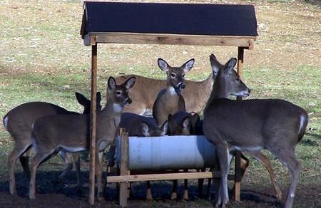 How to Build a Deer Feeder Deer Feeder