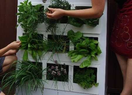 How to Go Green with a Worm Farm Green Plant