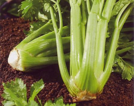 How to Grow Celery  Grow Celery