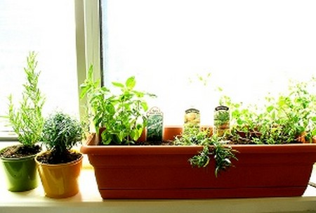 How to Grow Herbs in Containers  Grow Herbs in Containers