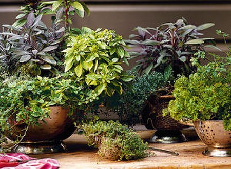 How to Grow Herbs from Seed  Grow Herbs
