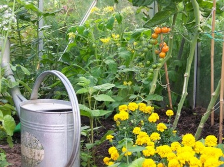 Growing vegetables in containers videos