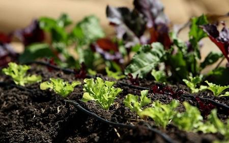 How to Start an Organic Garden Organic Garden