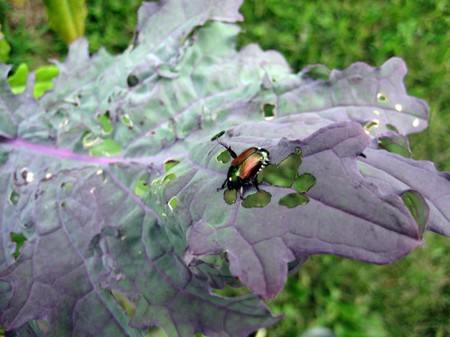 How to Take Advantage of Critical timing for Pest and Disease Control in your garden  Pest Control