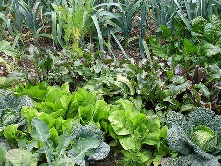 How to Deal with Pests and Disease Problems in your Organic Garden  Pests and Disease in Garden