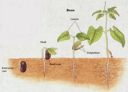 How to Grow Plant from Seed  Seed to Plant