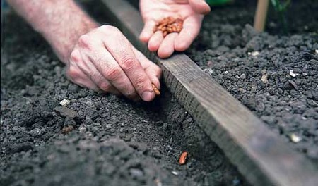 How to Warm up the Soil to Sow Outdoors in your Organic Garden  Soil Sow Outdoors