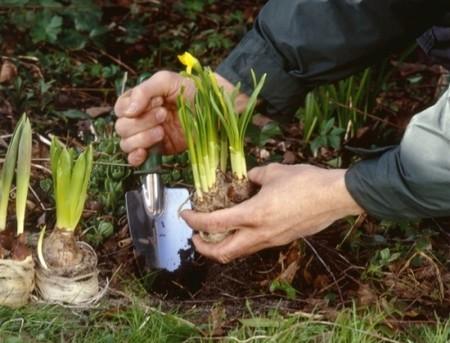 How to Transplant Flowers Transplant Flowers