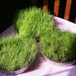 How to Grow Grass