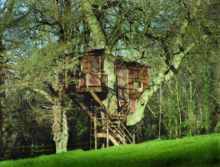 How to Build a Tree House Tree House