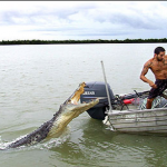 How to Survive an Alligator or Crocodile Attack