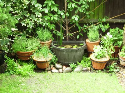 How to maintain potted herb gardens workwithnaturefo