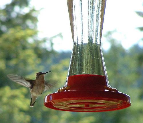 hummingbird feeder food how to make