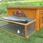 How to Build a Chicken Coop?