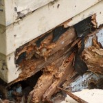 How to Treat Dry Rot
