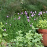How to Design an Informal Herb Garden
