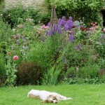 How to Design a Garden for Children and Pets