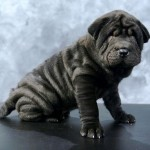 How to Handle When Wild Animal Attacks Your Chinese Shar-Pei Dog