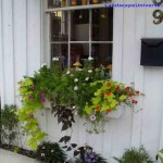 How to Feed and Hang Baskets in Window Garden