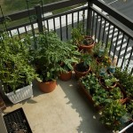How to Maintain General Plants in Your Balcony Garden
