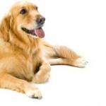How to Live with an Older Dog