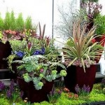 How to Plant for Container Garden