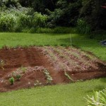 How to Determine the Soil Condition in Your Garden