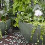 How to Feed and Water for Container Garden