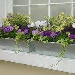 How to Deal with Pests and Disease in Window Garden
