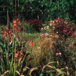 How to Assess Your First Garden