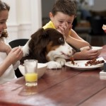 How to Teach Children to Care for Pets