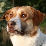 How to Handle Dogs Constipation