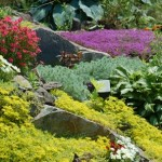 How to Divide Your Garden Plants