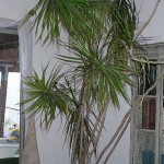 How to Grow Houseplants