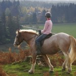 How to Improve Transitions in Horse Riding