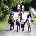 How to Prepare for Horse Riding Lessons