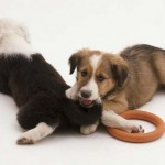 How to Train Dogs to Seek and Play-Biting