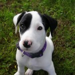 How to Train your Puppies to have Greeting Manners