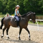 How to Ride a Horse – The Right Approach