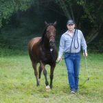How to Train a Horse to Lunge