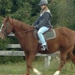 How to Recognize and Understand Your Horse's Behavior