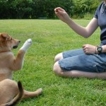 How to Train your Dog using Effective spoken language