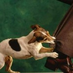 How to Train Dogs that are Attention-Seeking and Play-Biting