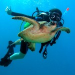 How to Establish a Scuba Diving Career